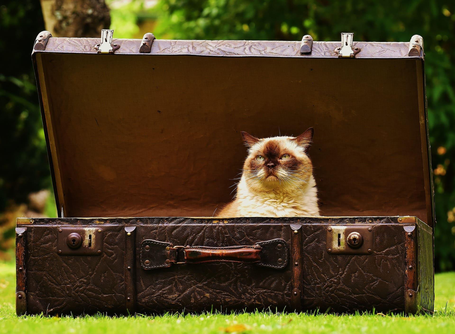 La forma perfecta de hacer la maleta