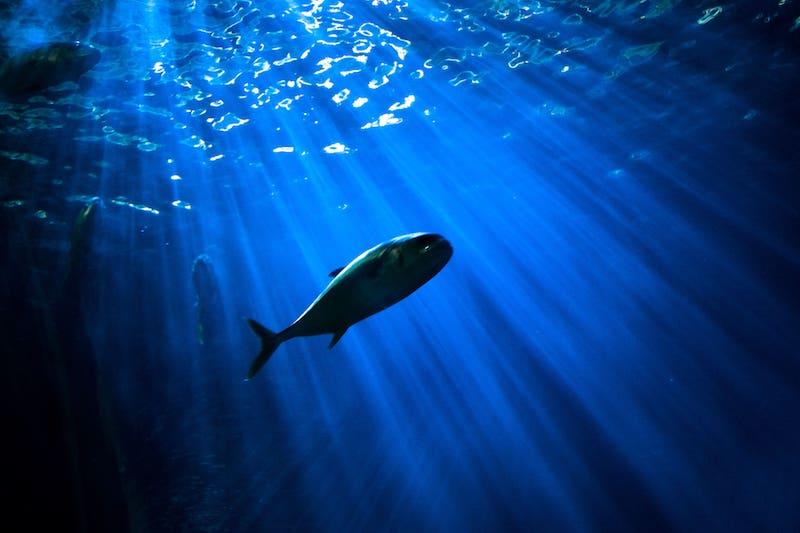Ya puedes ir a lo más profundo del océano como turista