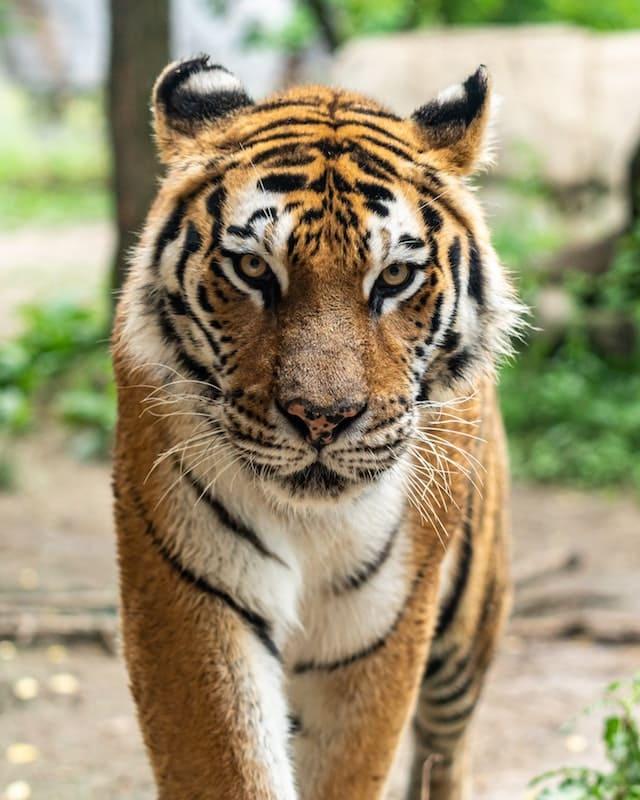 Estos son los 10 animales más peligrosos del mundo